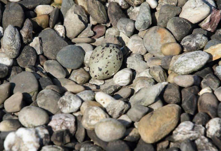 Het eerste ei op het dak van 2020!